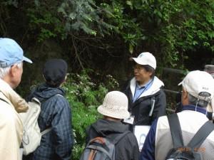 森戸川林道でシャクを観察