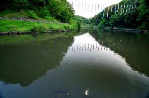 まつりが終わり、鯉がゆっくり泳いでいました