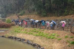 ヒガンバナの葉のしげる池の脇を進む