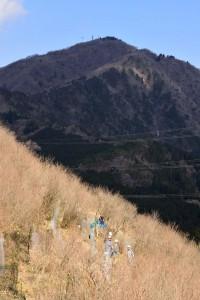 くっきりとした稜線の大山の下で植樹