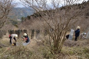 植えた苗木に鹿よけのネットをかぶせます