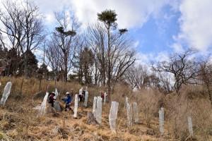 11種類の苗木を植える