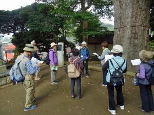 五霊神社のイチョウの大木