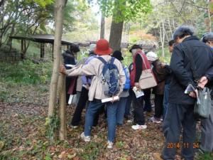 品川さんの説明でフユノハナワラビナの胞子葉を観察する参加者のみなさん
