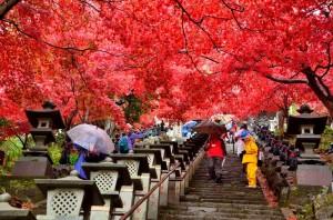 大山寺では真っ赤に色付き鮮やかでした