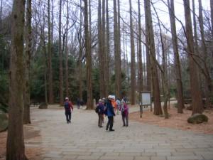 生田緑地メタセコイアの林