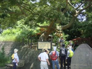 本牧神社縁の木(榎)の下で