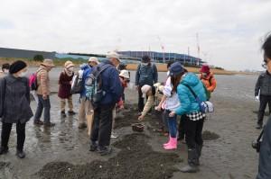 多摩川0km地点干潟ヤマトシジミ