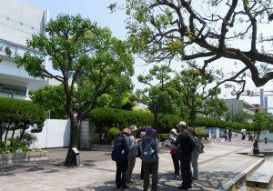 ナンキンハゼとクスノキの並木が続く三笠公園