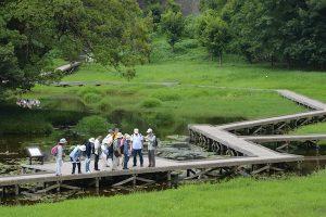 厳島湿性公園の木道