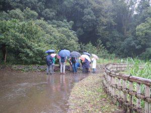 雨の中谷戸の散策