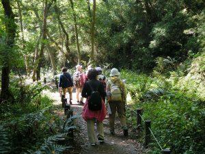 ハンノキ林の中を歩く
